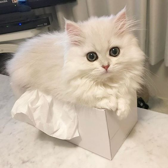 You Need To Know How So You Can Clean It Much Easier Come See On My New Litter Channel On Youtube If You Have 1 O Fluffy Kittens Kittens Cutest Cute Cats
