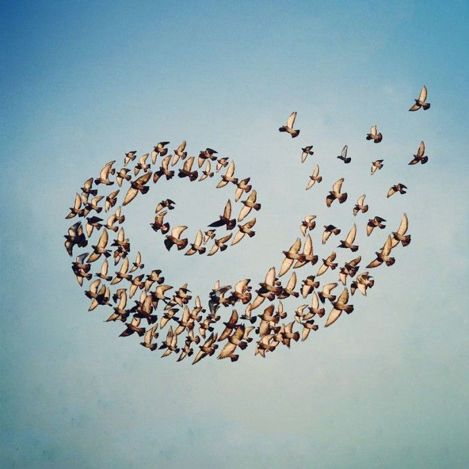 """In his photo manipulation series """"Flying Formation,"""" artist Shaun Kardinal uses images he found on google and friends' Facebook and Instagram Feeds..."""