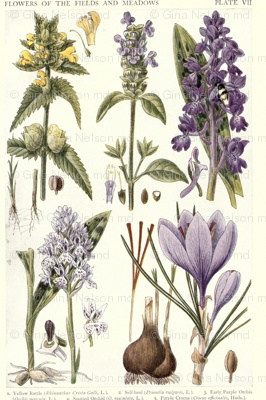 Antique botanical drawing of Lavenders -  #YorkshireLinen #Dreamduvetcover