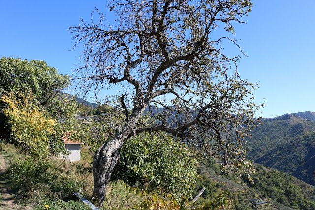 Castelvittorio (IM) - una vista sulla vallata del ...