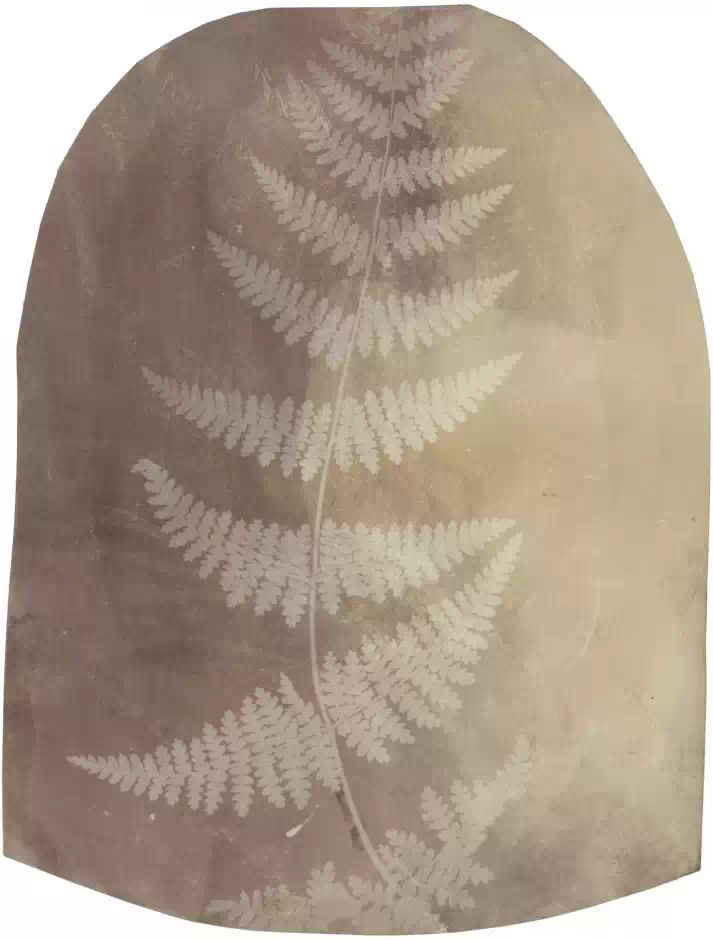 "William Henry FOX TALBOT, Feuille de fougère ""Fern-Buckler"" sud américaine, 28 mars 1839"