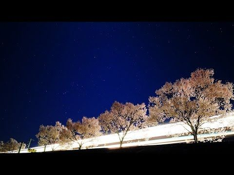 満開の彼岸桜とオリオン座 - YouTube