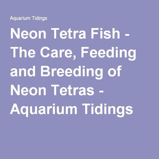 Neon Tetra Fish - The Care, Feeding and Breeding of Neon Tetras - Aquarium Tidings