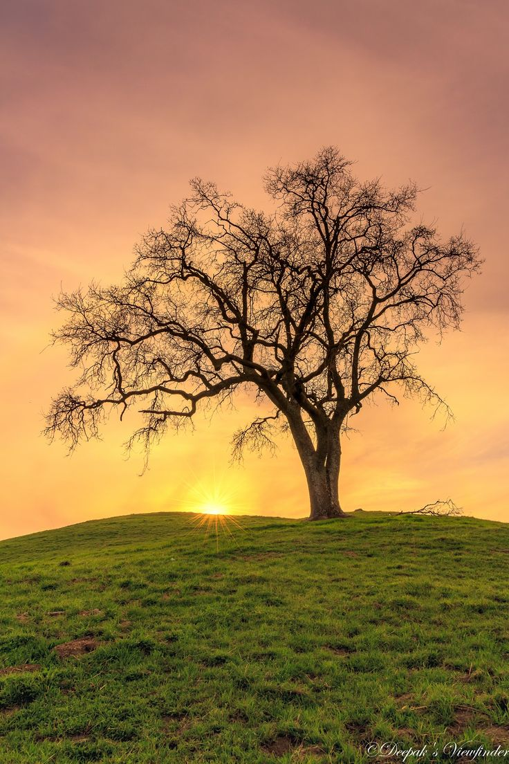 Standing Strong! - A Lone Tree stands strong atop a hill at Sierra Open Preserve in San Jose, CA.