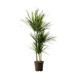 Plants - Outdoor pots and plants - IKEA