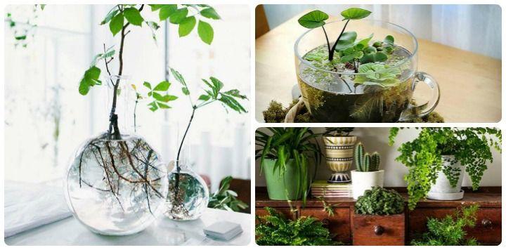 The 25 best indoor mini garden ideas on pinterest for Indoor mini garden ideas