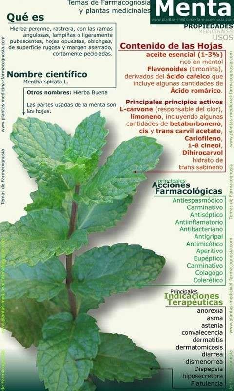 más de 25 ideas increíbles sobre cultivo de menta en pinterest