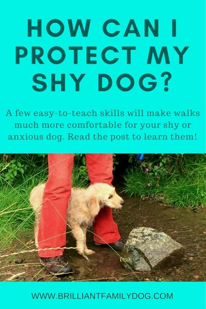 Pin By Joss S Love And Care On How To Train Your Dog Dog