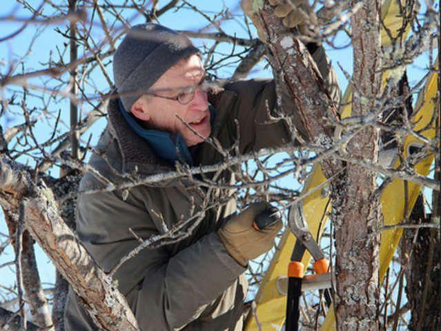 Les 20 meilleures id es de la cat gorie jardin ombrag sur pinterest plante - Quand tailler un olivier ...