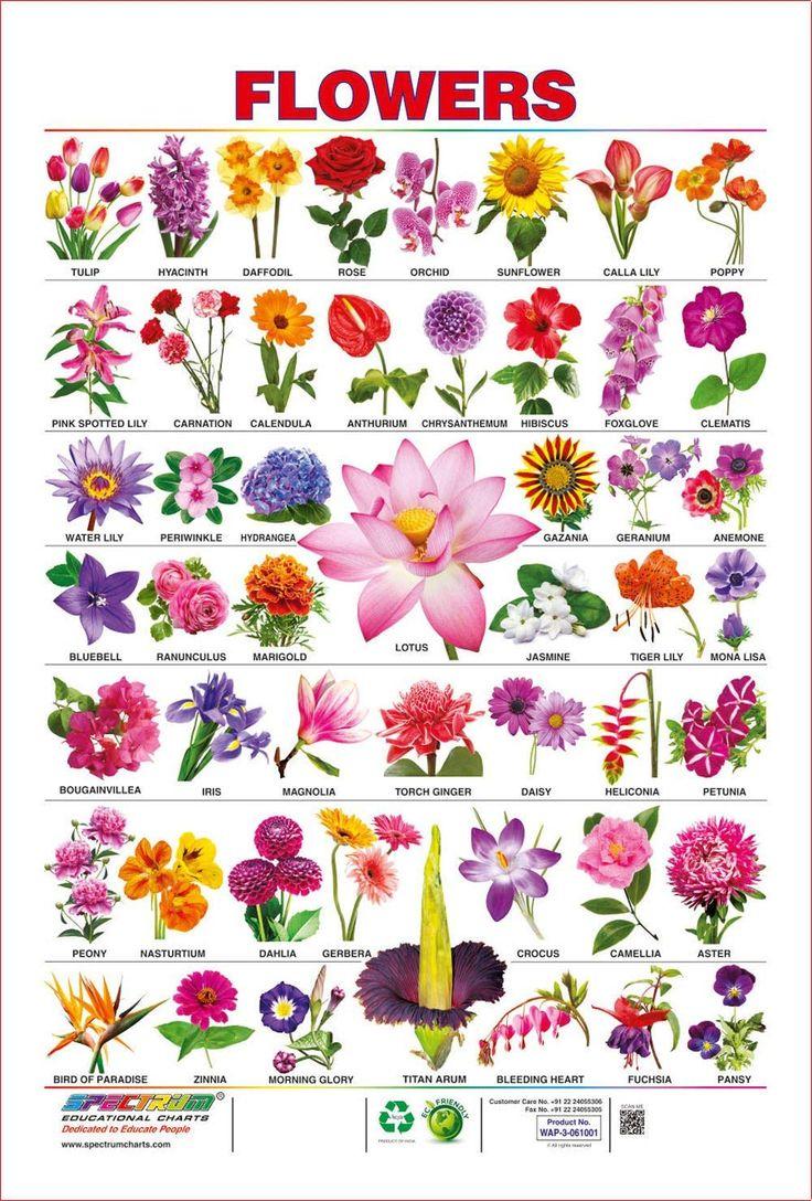 Spectrum PreSchool Kids Learning Laminated Flowers Name