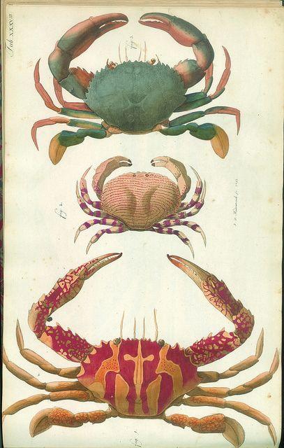 Versuch einer Naturgeschichte der Krabben und Krebse, crab, natural history, illustration