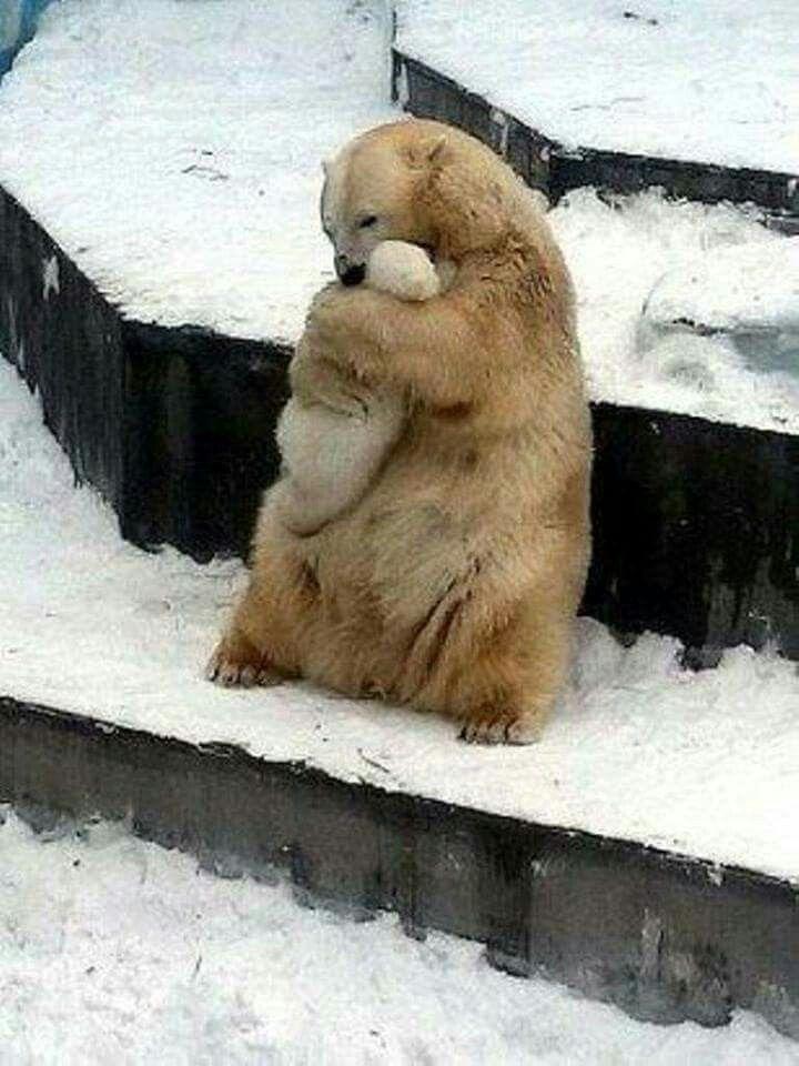 Beautiful, Bear love