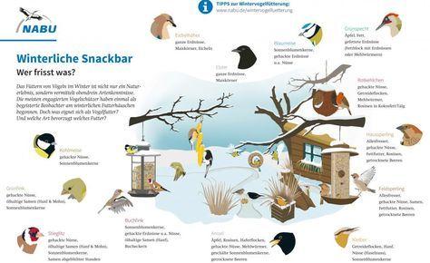 Das Schaubild des Naturschutzbunds Deutschland (NABU) zeigt, welcher Vogel welcheNahrung bevorzugt (links, zum Vergrößern klicken).Sonnenblumenkerne und sogarMaisstehen bei fast allen Vögeln hoch im Kurs (rechts)