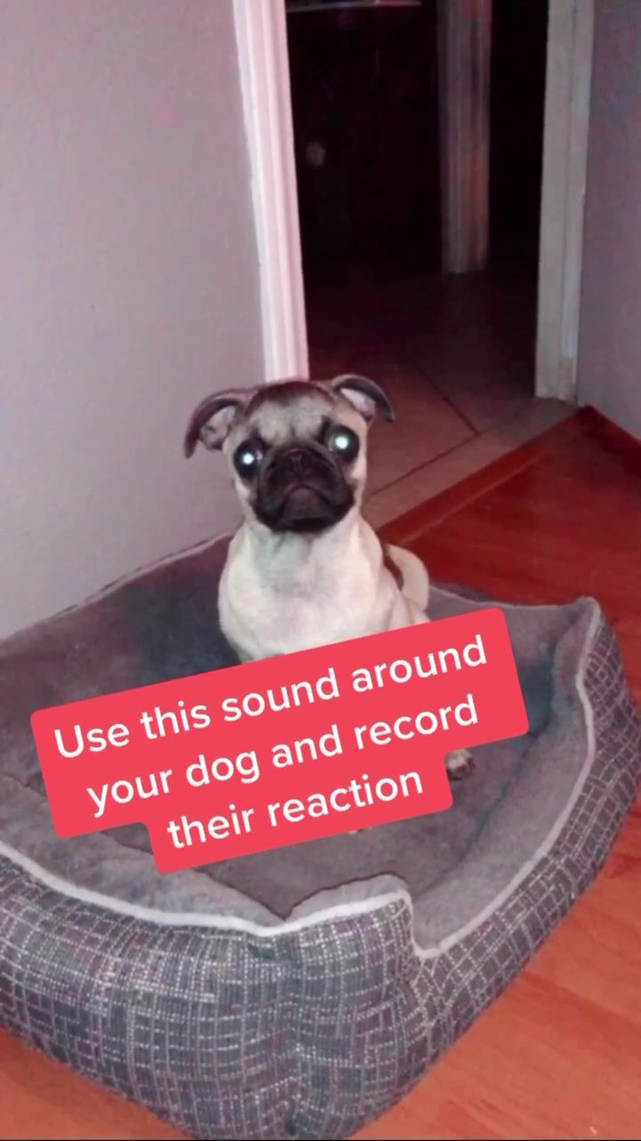 Pin By F On Tik Tok Funny Dog Pictures Your Dog Dogs