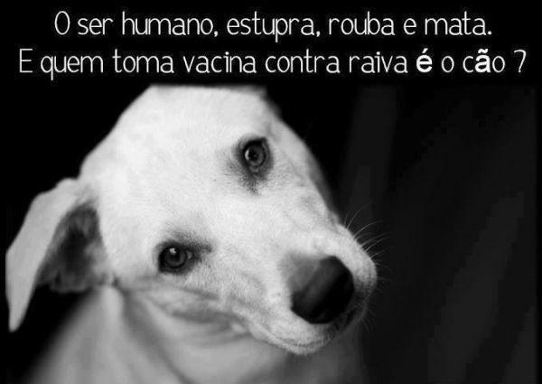 O ser humano estupra, rouba e mata. E quem toma vacina contra raiva é o cão? (Frases para Face)