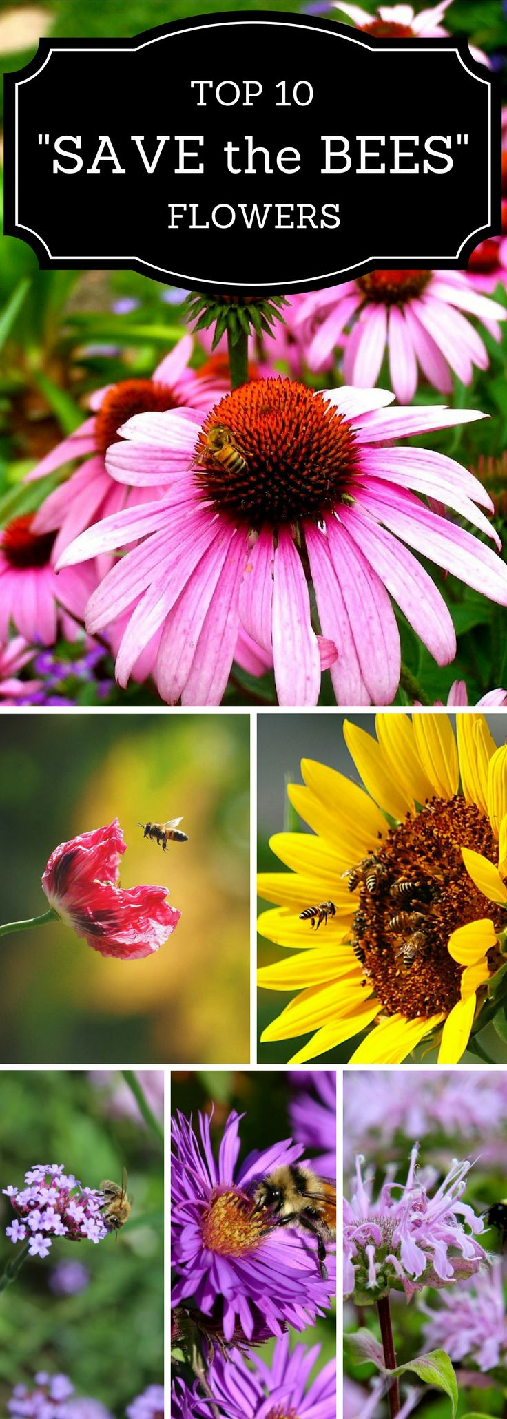 "Top 10 ""Save the Bees"" Flowers"
