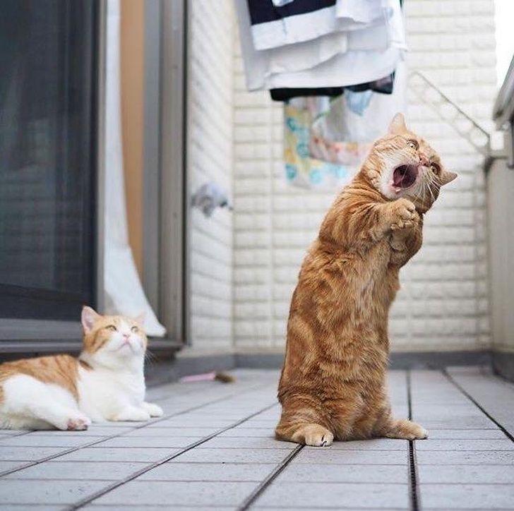 смешные картинки из жизни кошек дальше