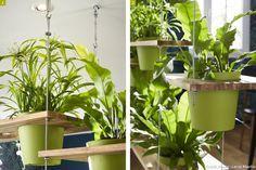Des étagères forment une cloison végétale dans le salon ! planches percées de trous aux diamètres des pots de fleurs. Planches suspendues grâce à des câbles.