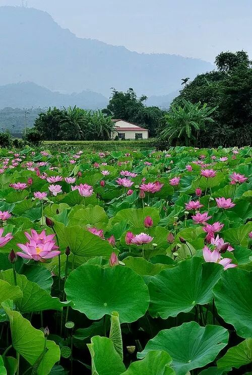 17 best images about gardens of bali on pinterest bali garden gardens and balinese for Lotus garden meditation center