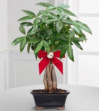 The Use of Money Tree in Feng Shui: http://fengshui.about.com/od/fengshuiwealthcures/ig/Classical-Chinese-Feng-Shui-Money-Products/Feng-Shui-Money-Tree.htm