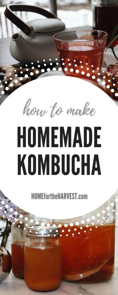 How to Make Homemade Organic Kombucha | Home for the Harvest