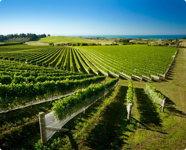 Hawke's Bay in @Pure New Zealand is the Wotif.com hot spot of the week.  Accommodation deals are from only AU$80 until next Monday.  #deals #travel #NewZealand #HawkesBay #Vineyard #WineRegion #WotifHotSpot