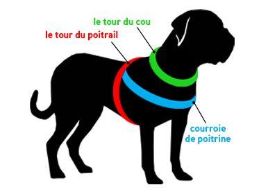 Comment mesurer le chien pour ce harnais :