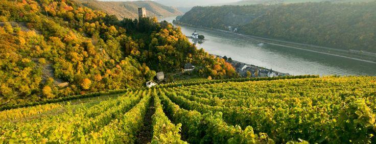 castles in romantic germany - the rhineland-palatinate | Romantic Germany > Wine & Food > Wine regions