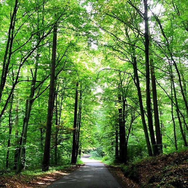 Las w okolicach Ośrodka