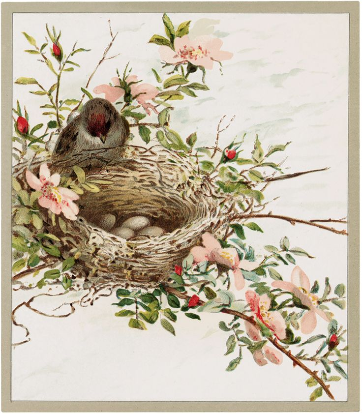 Lovely Lovely Pastel Bird Nest Picture! - The Graphics Fairy