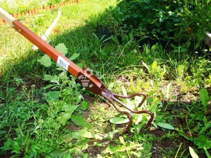 Общие рекомендации: как вывести сорняки с огорода