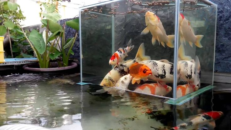 Fish towers make your fish look like they're in Zero-G