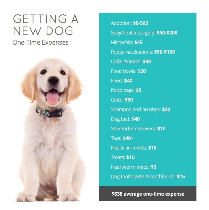How Much Will It Cost To Put A Pet Down
