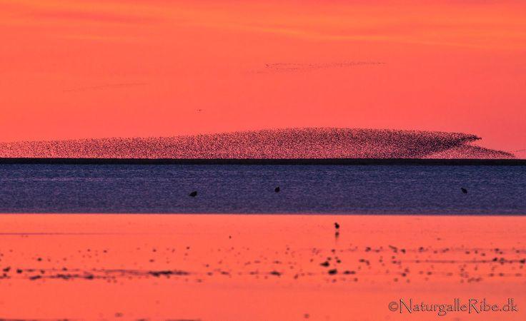 sort sol mellem Fanø og Mandø