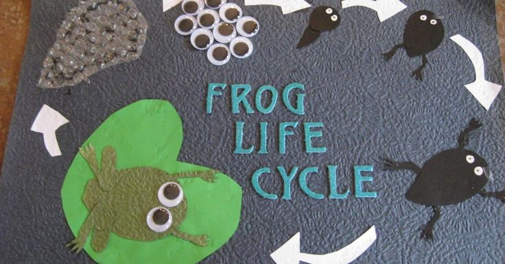 This week we have been looking at the frogs life cycle.  We started our topic books by creating a Title Page about frogs. This was a real ...