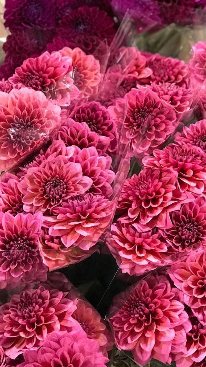 Fresh Flowers Near Me In 2020 Heliconia Flower Flowers Greenery Background