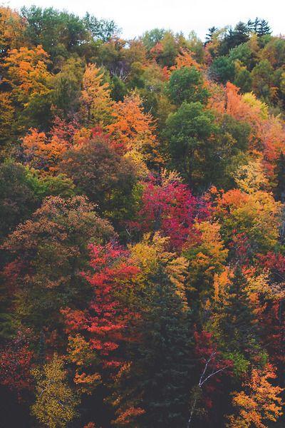 Spectrum of Fall. By: Jonah Reenders