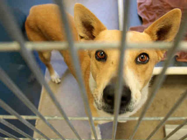 Www Petharbor Com Animal Search Adoptable Animal Shelter Humane Society Animals