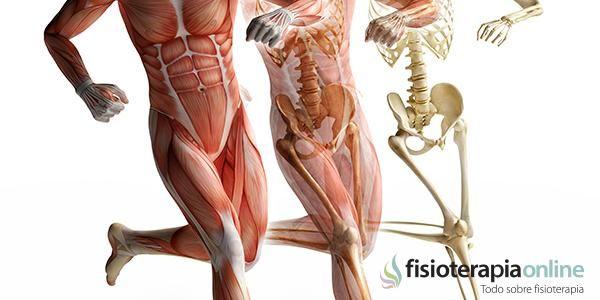 MECANISMOS DE CONTROL POSTURAL GLOBAL   Fisioterapia Online