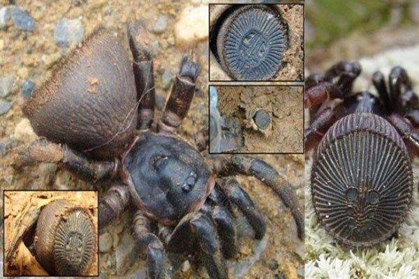 rare spiders of china - 600×400