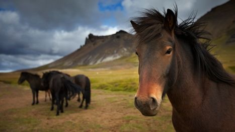 The land of fire and ice: touring Iceland's Golden Circle  Read more: http://www.lonelyplanet.com/iceland/travel-tips-and-articles/76868#ixzz2yf54TLmU