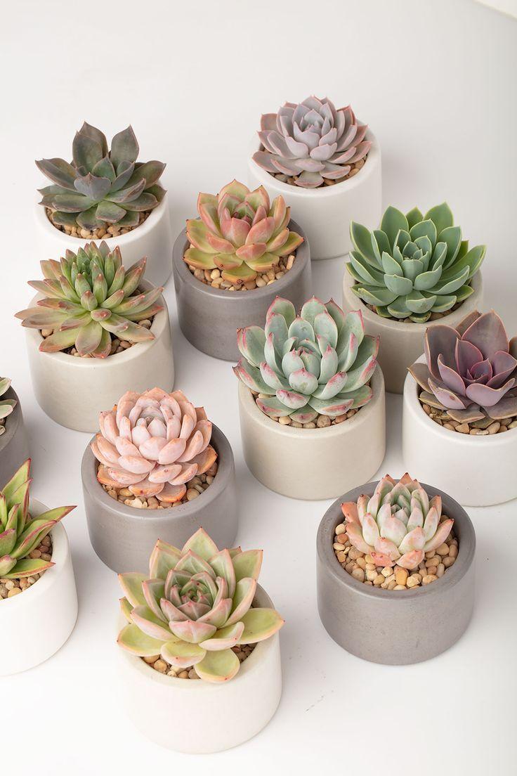 Wunderschöne handgemachte Pflanzgefäße aus Beton, perfekt für Sukkulenten. Von opusconcrete.c…