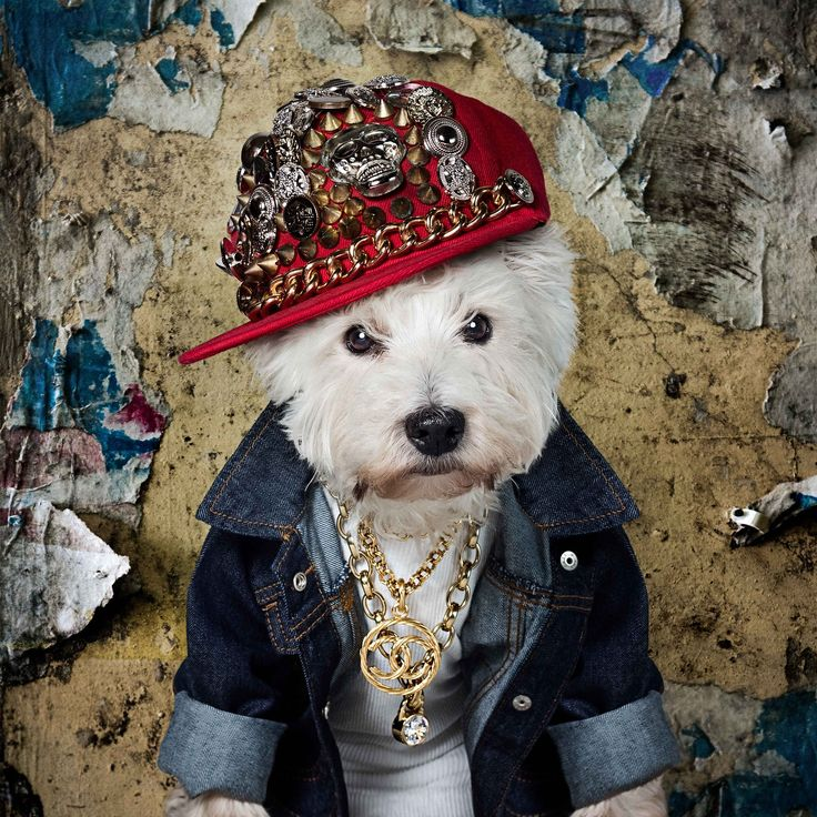 It was our pleasure to photograph this fur-baby belonging to Brooke Woods Bagwell. Meet Duke! He's a super swag Westie from Dallas. Duke is sporting his vintage Chanel like a Rockstar!