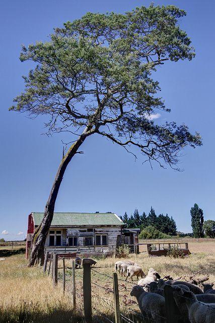 Old house, Fernside, near Rangiora, Canterbury, New Zealand   Flickr - Photo Sharing!