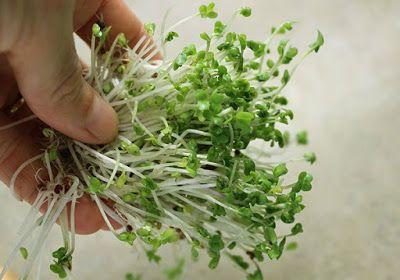 ΟΛΥΜΠΙΑΚΗ ΦΛΟΓΑ: Φύτρα Μπρόκολου: Αυτή η τροφή έχει 1000% περισσότε...