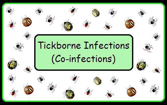 "Lyme Disease is not the only infection that is passed by a tick bite. These other diseases have become known as ""co-infections."""