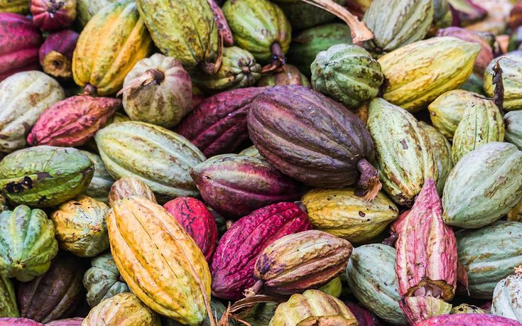 Not relevant to anything but I was just struck anew at how absolutely beautiful cocoa pods were.