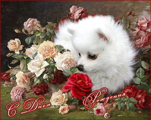 Красивые картинки с днём рождения - С Днем Рождения картинки открытки - Красивые картинки анимации