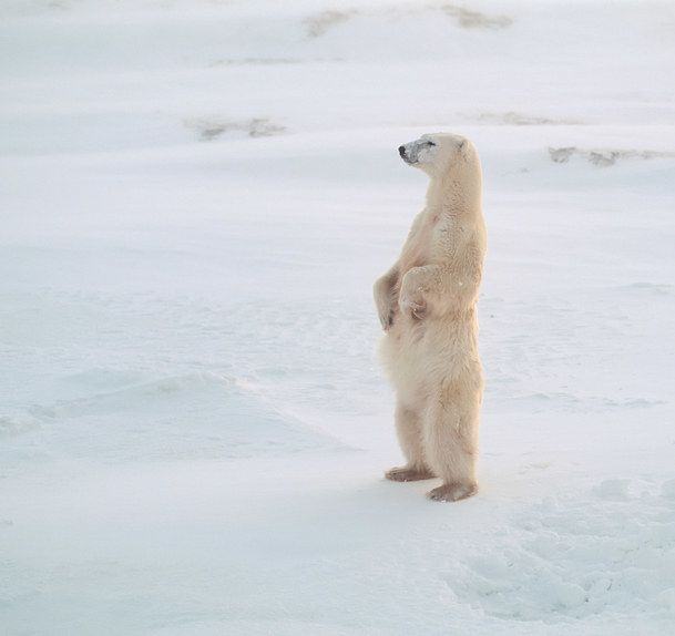 """When you're trying to remember where you parked the damn car. 