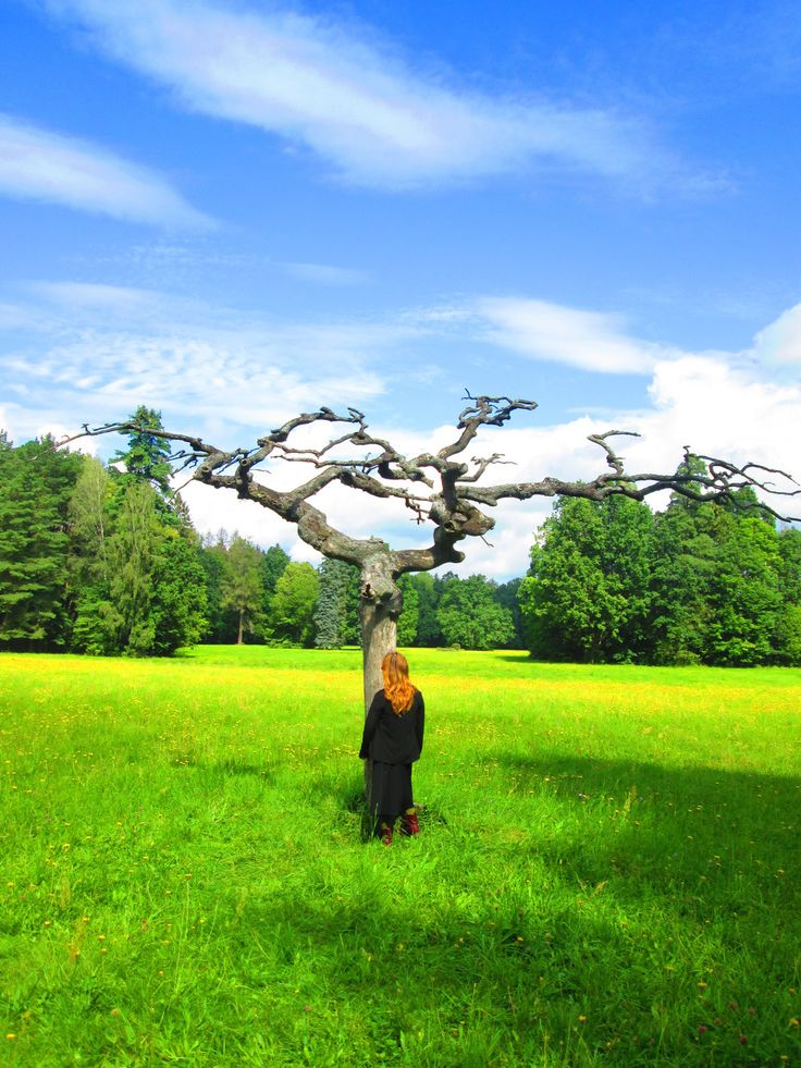 One tree by ImperataLexinor on DeviantArt